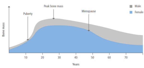 Bone mass throughout life