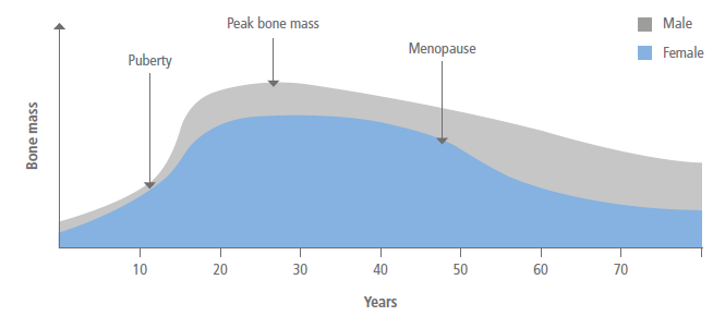 Bone mass throughout the life cycle